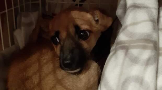 Дочка принесла маме щенка, который умещался на ладони. Кто-то подбросил его в подъезд
