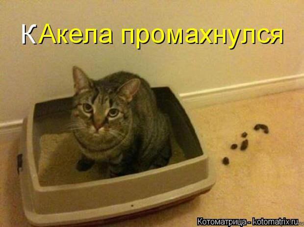 kotomatritsa_y (2) (600x449, 164Kb)