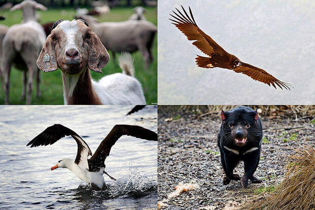 Животные, чья сексуальная жизнь покажется человеку знакомой