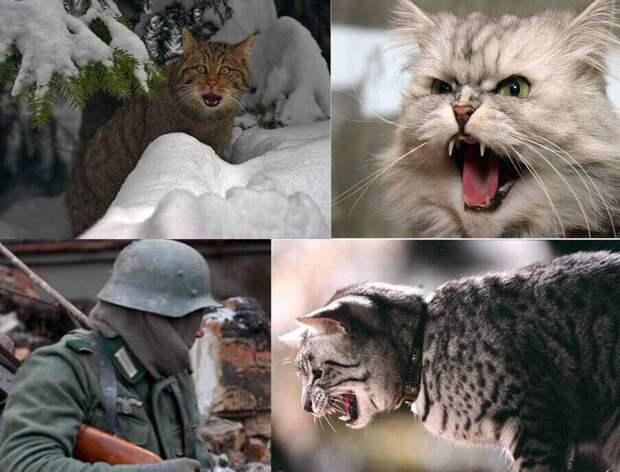 Рассказы о животных 10