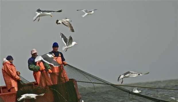 Рыбные миллионы России: главный сырьевой гигант Европы затеял «войну» с РФ