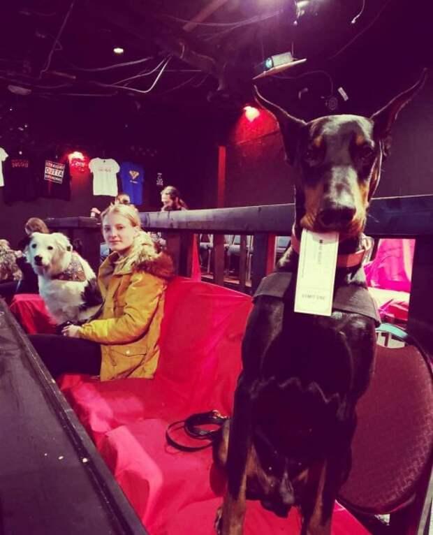 В Техасе есть кинотеатр, в который можно приходить вместе со своей собакой
