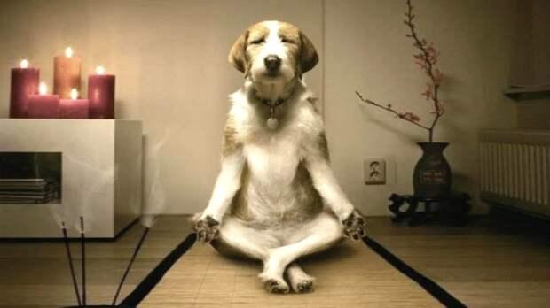 Невозмутимость и хладнокровие: самые спокойные породы собак назвали кинологи