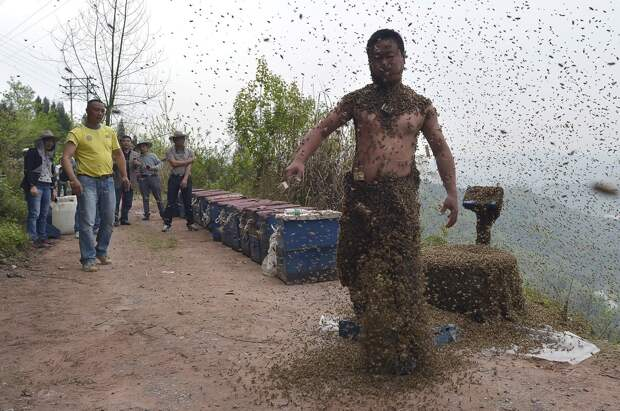 Вы удивитесь, когда узнаете, зачем этот человек ходит в костюме из пчел опасно, пчелы, фото