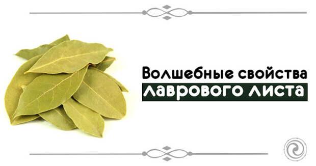 Волшебные свойства лаврового листа