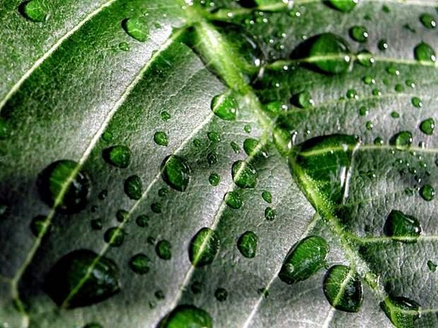 Новые «бионические» листья почти в 10 раз эффективнее, чем природный фотосинтез