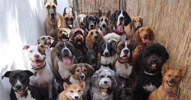 Породы собак от больших до маленьких больших, бульдог, до маленьких, питомец, породы, собак, такса