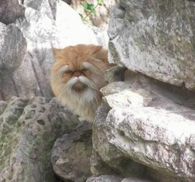 Старый кунг-фу мастер животные, коты, смешные картинки, юмор