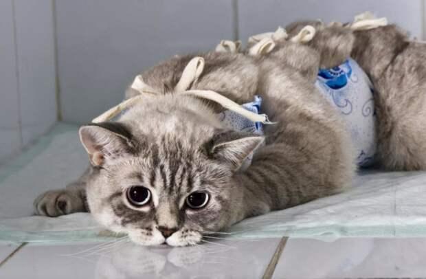 Стерилизация кошек: этика и гуманность вопроса с различных точек зрения