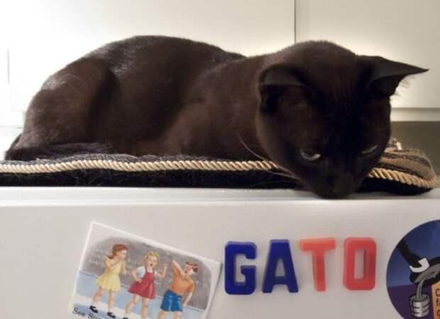 17 доказательств того, что у котов есть не только лапки, но и развитый интеллект