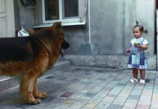Дочь спасла большого пса с рынка, которого никто не любил, а он хотел жить и любить как и все