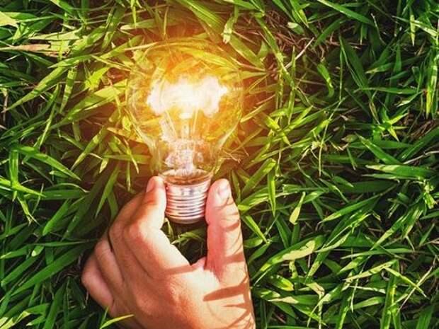 7 лучших трав для восстановления энергетики весной.