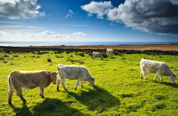 Мифы и правда: Ирландия и ирландцы