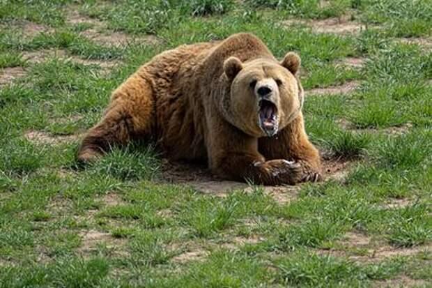 Тюменский боксер убил напавшего на него в лесу медведя