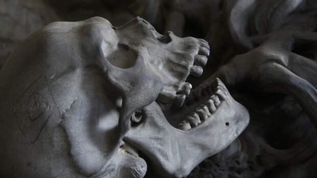 В Озерках недалеко от кладбища нашли неопознанный человеческий скелет