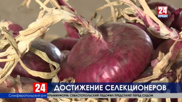 Достижение селекции: крымские учёные запатентовали новый сорт ялтинского лука