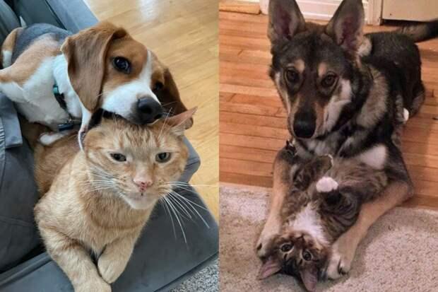 Смешные фото о сложных отношениях кошек и собак, которые сделают ваш день