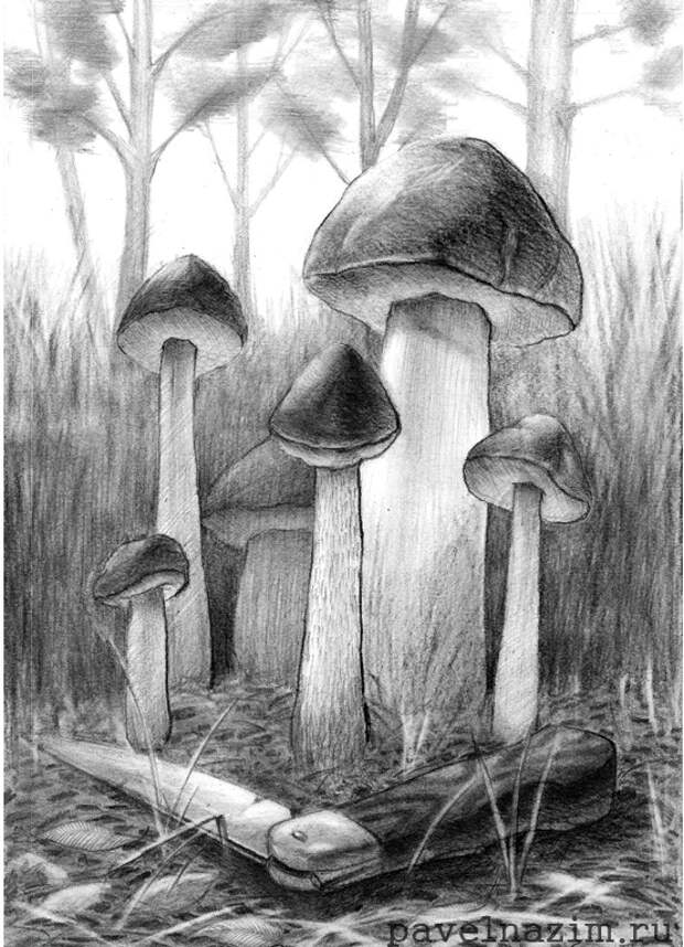 ВСТРЕЧА В ЛЕСУ. Павел Назим. На лесной опушке любопытные грибы обступили утерянный кем то Нож. 28.7х20.0 см, карандаш, бумага, 2009