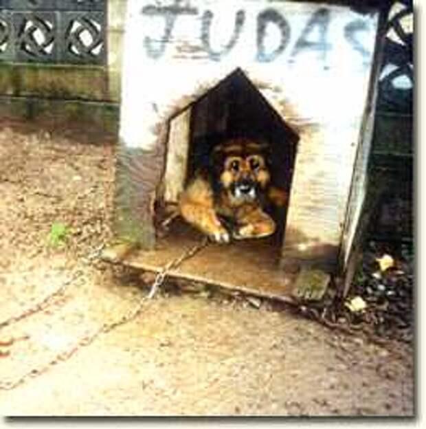 Целых 10 лет собаку держали на цепи, посмотрите на её реакцию после освобождения