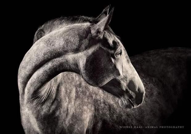 Кулио животные, искусство, лошади, фотография