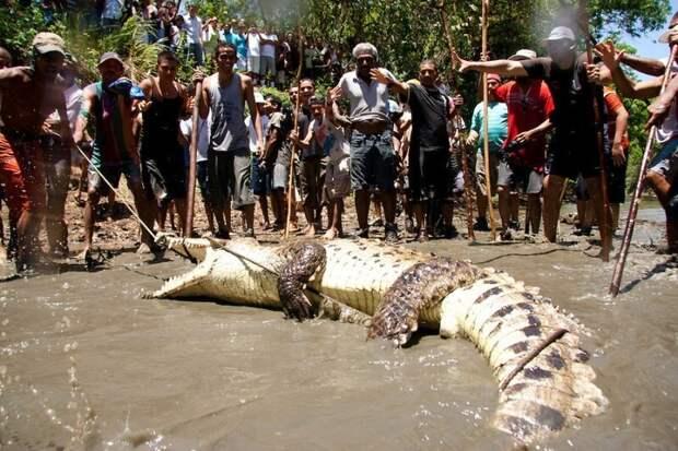 Какая Пасха без ловли крокодила?