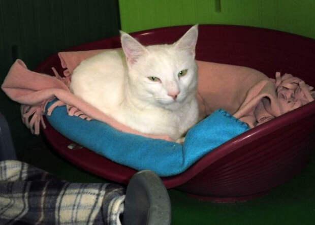 Пропавшего на Корсике кота Снежка нашли в 1650 км от дома