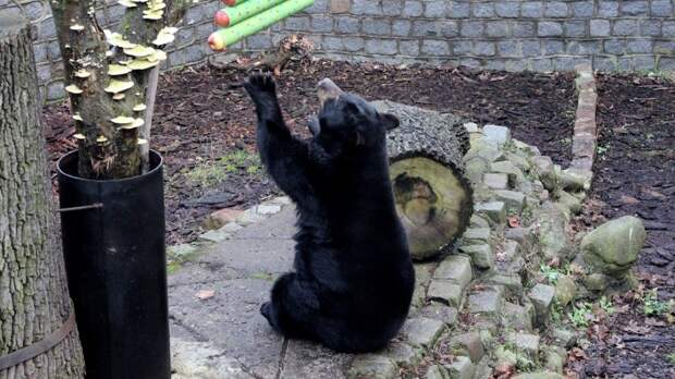Медведи из сахалинского зоопарка прошли вакцинацию