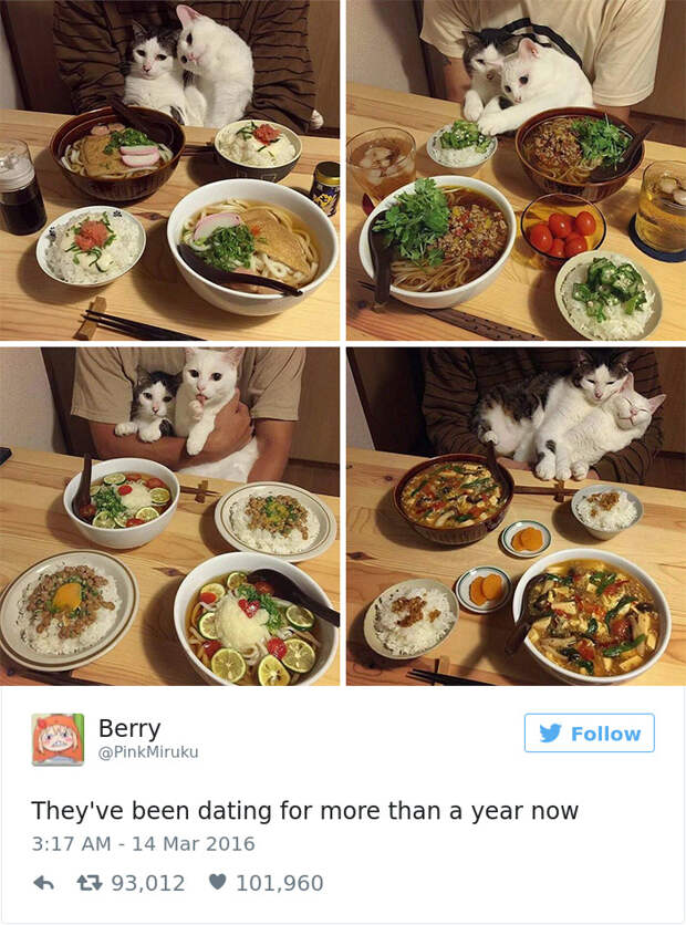 Топ 20 самых смешных твитов уходящего года про котиков