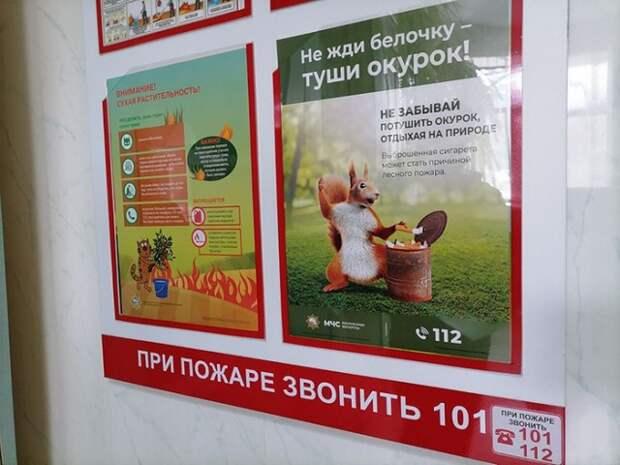 Не жди белочку - туши окурок Бобруйск.