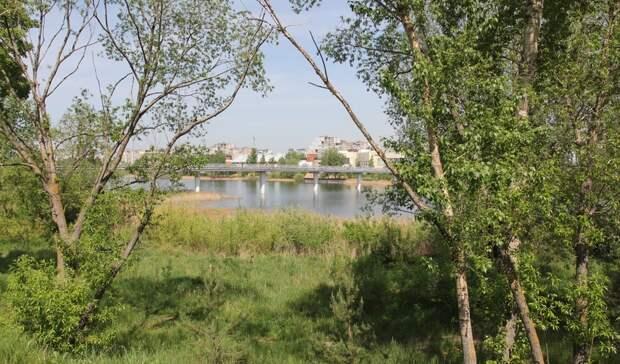 Под снос: более 1,1 тысяч аварийных деревьев вырубят вНижнем Новгороде вэтом году