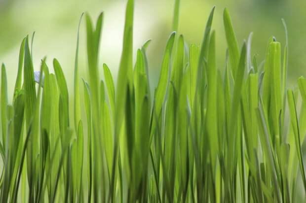 На 1-й Хуторской посеяли газонную траву