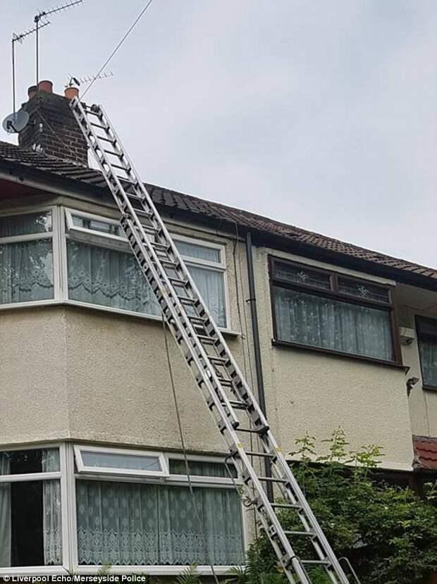 В Великобритании спасли застрявшего в дымоходе кота