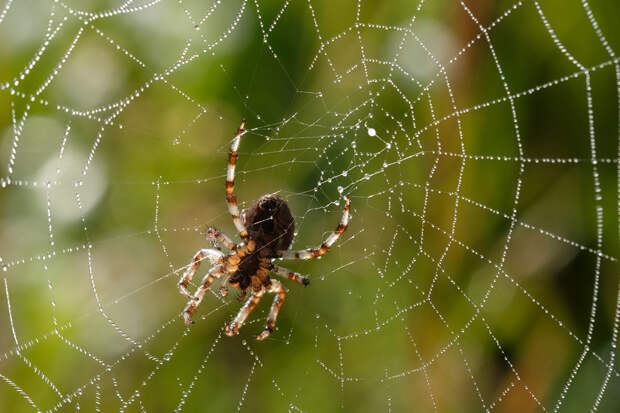 Что мы скажем паукам