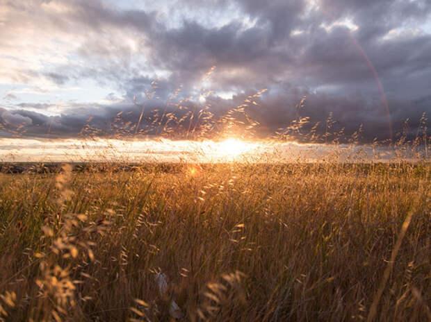 Вильфанд рассказал, что температуры Северного полушария летом будут выше нормы