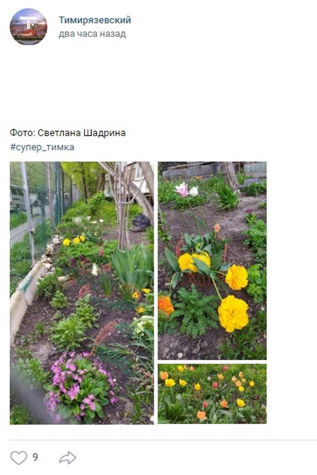 Фото дня: жители сделали цветочный палисадник на Дмитровке