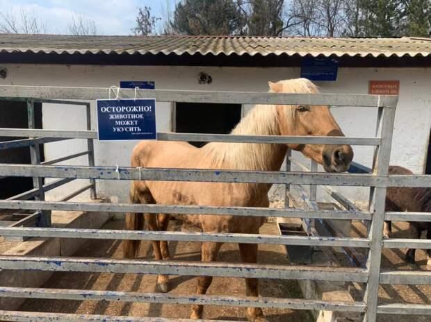 Лошадь откусила палец 5-летней девочке в зооуголке Симферополя
