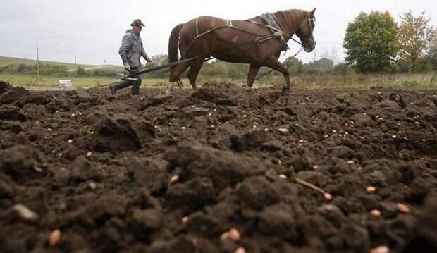 «Такого не было 20 лет» - в «аграрной сверхдержаве» разразилась аграрная катастрофа