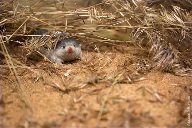 Сперва мне показалось, что это мыши почему-то ходят строем... Но на самом деле всё гораздо интереснее!