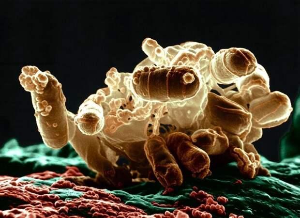 Halomonas salaria, бактерия барофил, или пьезофил - ей нужно огромное давление для размножения и выживания - для роста ей  требуется давление около 1000 атмосфер и температура 3 °C