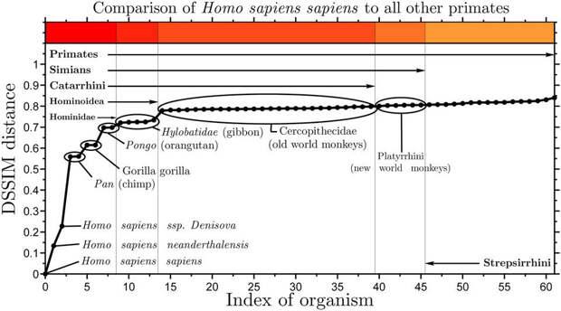 Карта сигнатур геномов от древних приматов до современного человека