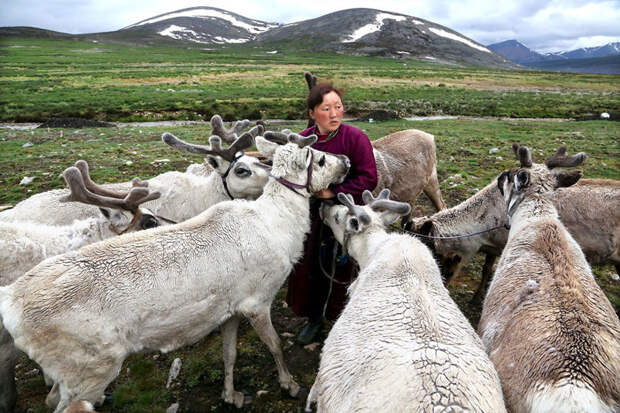 Кочевое племя оленеводов цаатан, Монголия красота, путешествия, фото