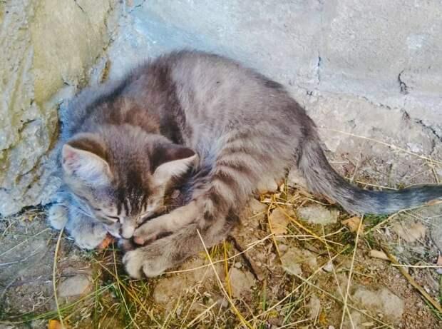 Через месяц малышам есть станет нечего, похолодает и придут голодные лисы!!! Помогите хотя бы временной передержкой!