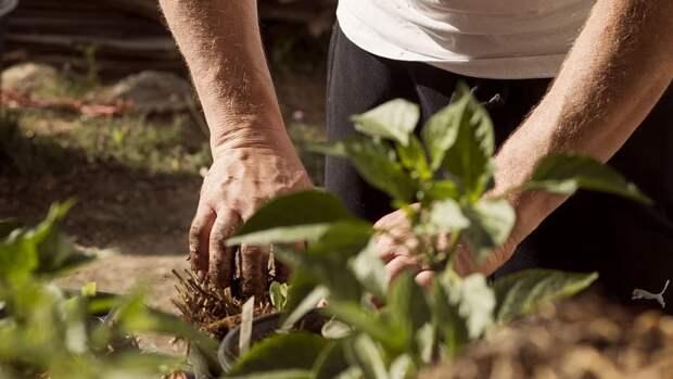 Садовод назвал семь простых способов облегчить работу на огороде