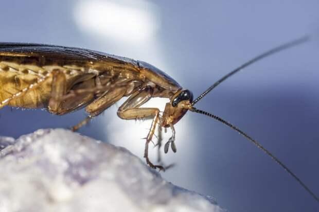 Беспокоят ли вас тараканы в доме?  — новый опрос жителей Ростокина