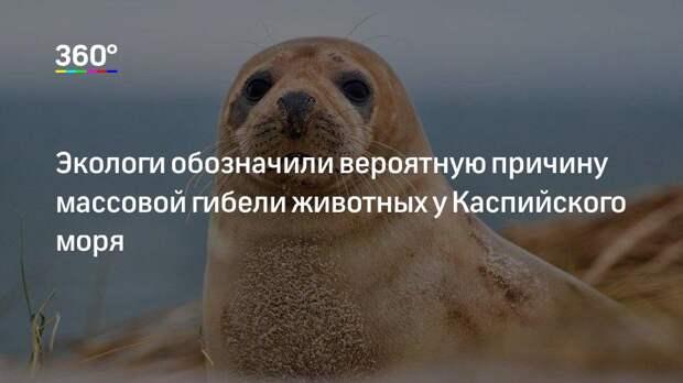 Экологи обозначили вероятную причину массовой гибели животных у Каспийского моря