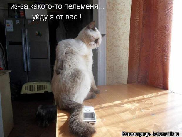 kotomatritsa_IY (640x480, 164Kb)