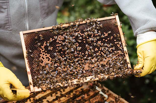 Когда аграрии прекратят травить пчёл