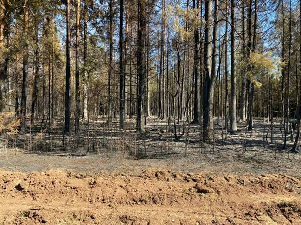 Пожар в нацпарке «Нечкинский» в Удмуртии удалось потушить спустя трое суток