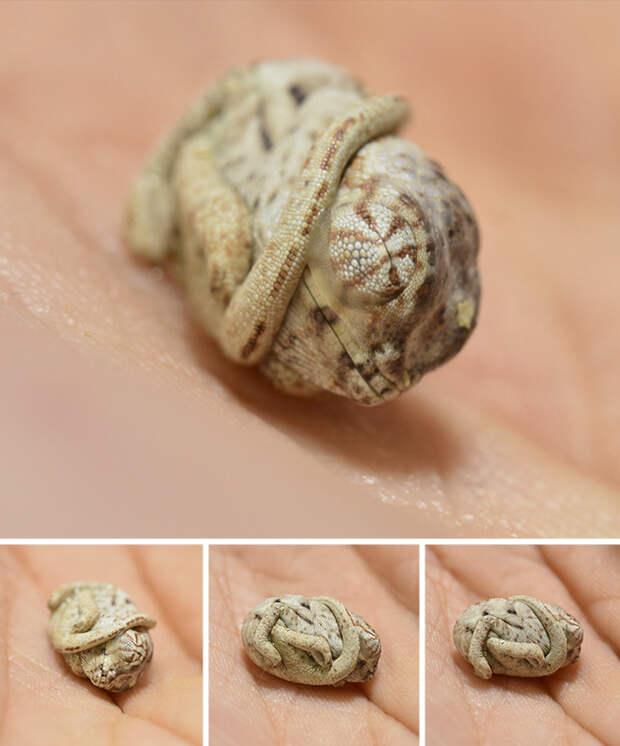 cute-baby-chameleons-582b81bbbde6c__700