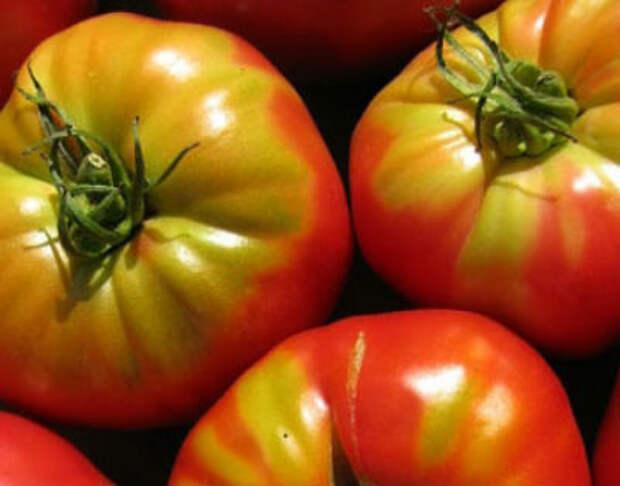 Почему не краснеют помидоры в теплице — как ускорить покраснение плодов
